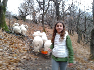 mouton_noir3